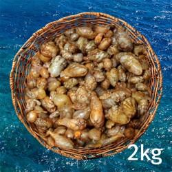 오만둥이(통영산) 2kg(냉동)