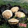 가리비(통영산) 10kg